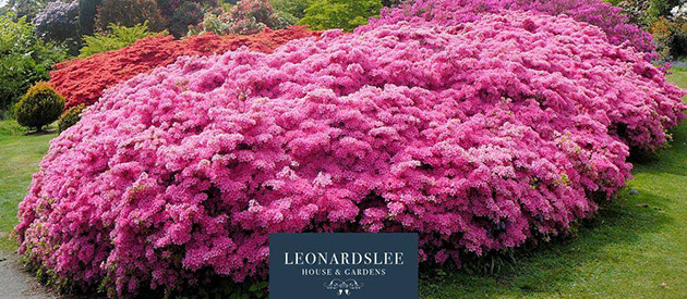 Leonardslee Gardens - Horsham UK - Benguela Collection