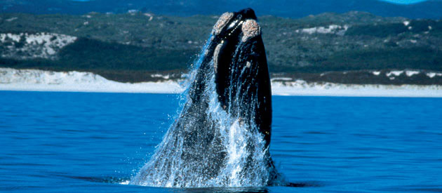 Whale-Watching Spots - Western Cape