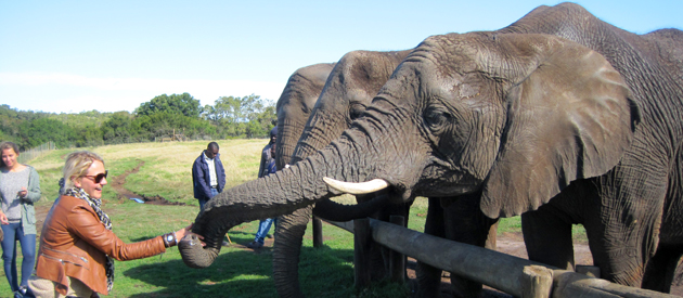 ELEPHANT SANCTUARY, THE CRAGS