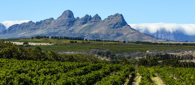 Stellenbosch, in the Cape Winelands region in the Western Cape, South Africa.